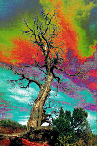 Habenero Photograph - Apocalypse Tree by Richard Henne