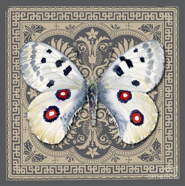 Painting - Apollo Butterfly Design by Amy Kirkpatrick