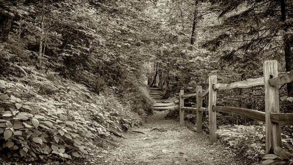 Wall Art - Photograph - Appalachian Trail At Newfound Gap - Sepia by Stephen Stookey