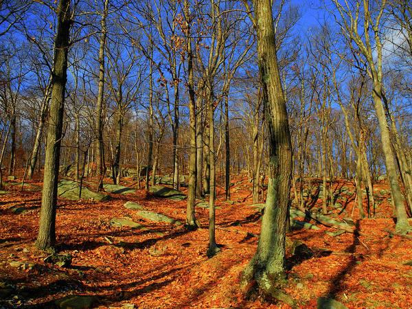 Photograph - Appalachian Trail Goes Through Harriman State Park by Raymond Salani III