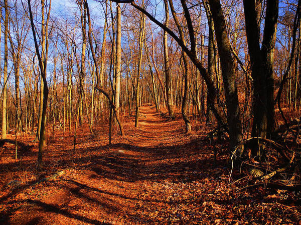 Photograph - Appalachian Trail In Maryland Near Wolfsville by Raymond Salani III