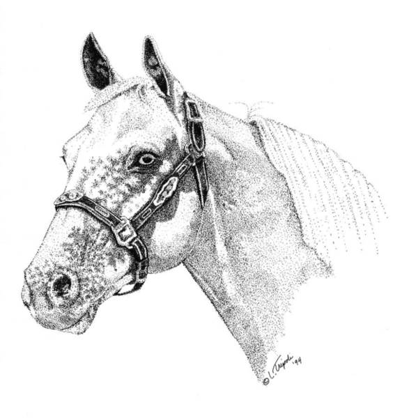 Appaloosa Drawing - Appaloosa by Lawrence Tripoli