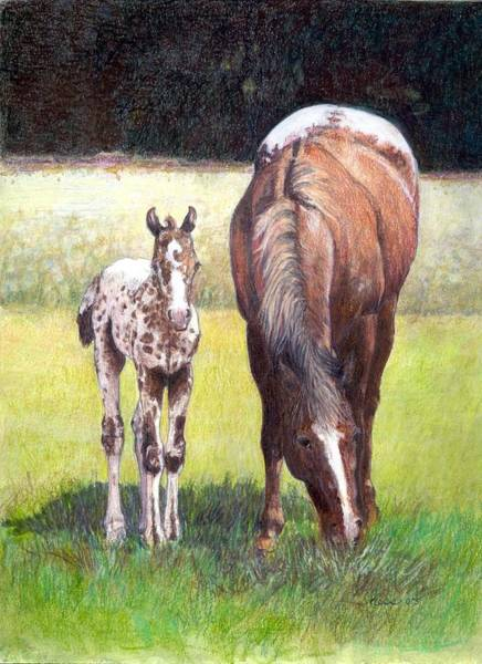 Appaloosa Drawing - Appaloosa Mare And Foal by Olde Time  Mercantile