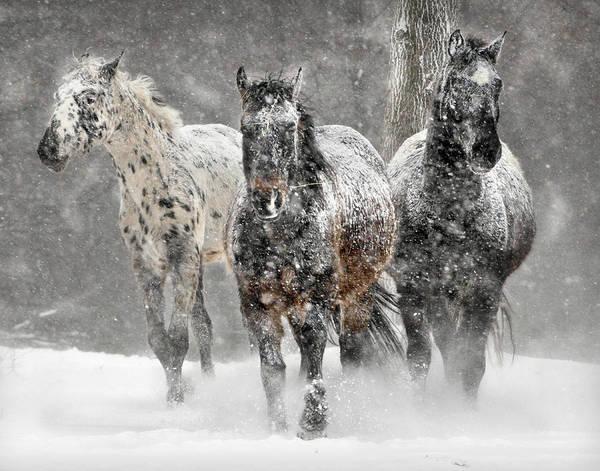 Horse Photograph - Appaloosa Winter by Wade Aiken