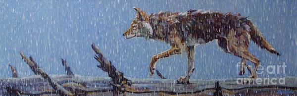 Coyote Painting - Apparition by Patricia A Griffin