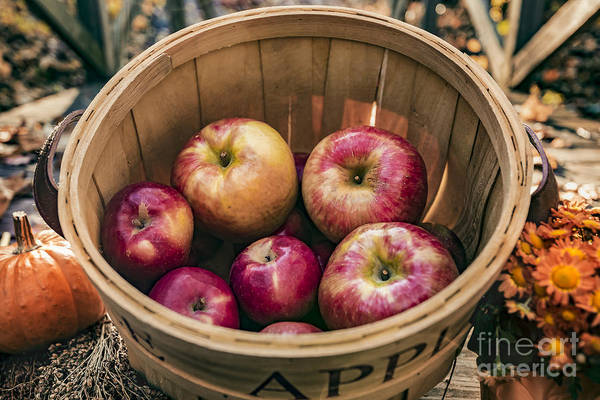 Photograph - Apple Basket by Alissa Beth Photography