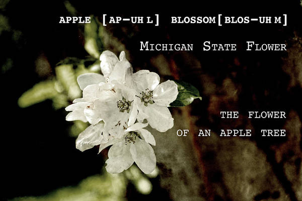 Photograph - Apple Blossom By Definition Michigan by Sharon Popek