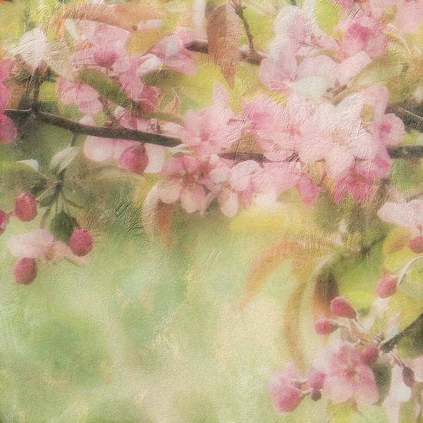 Digital Art - Apple Blossom Frost by Sand And Chi