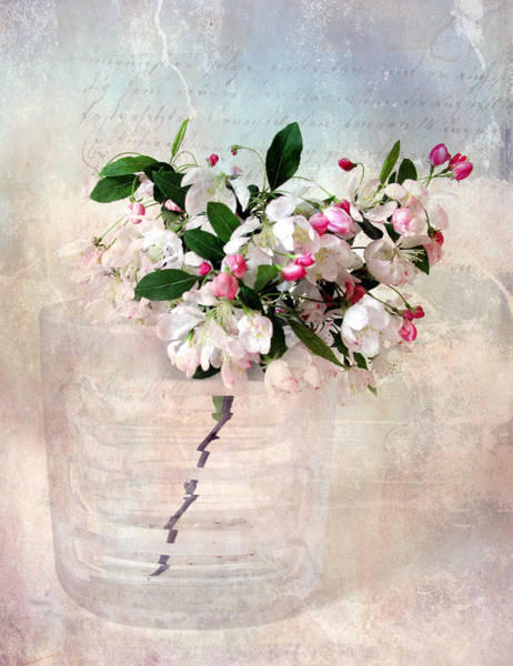 Apple Blossom Photograph - Apple Blossom by Jessica Jenney