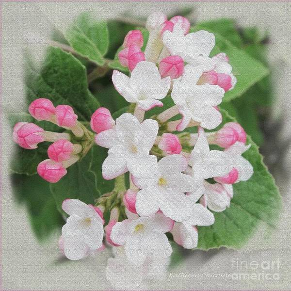 Photograph - Apple Blossom Time by Kathie Chicoine
