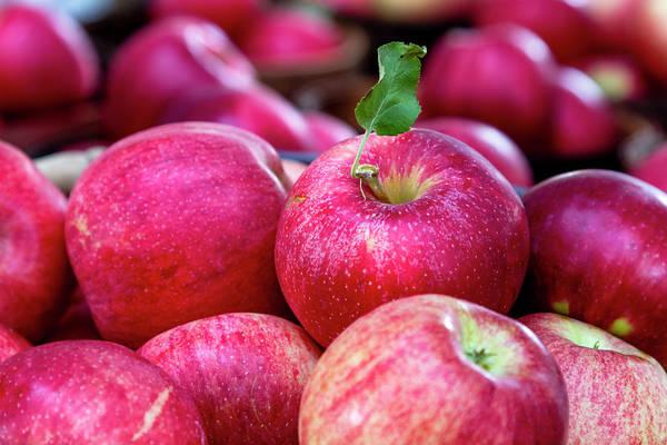 Photograph - Apple Love by Teri Virbickis