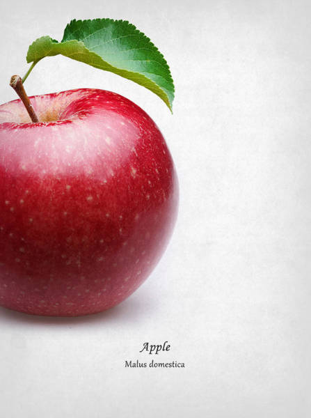 Wall Art - Photograph - Apple by Mark Rogan