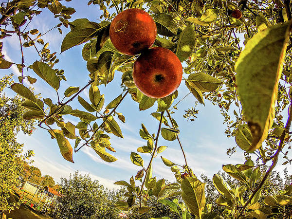 Photograph - Apple Orchard Farm by Alex Grichenko