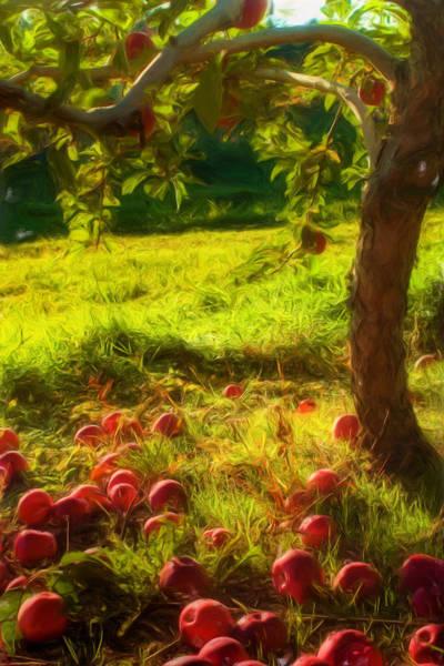 Photograph - Apple Picking by Joann Vitali