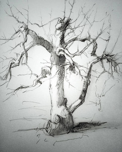 Apple Drawing - Apple Tree by H James Hoff
