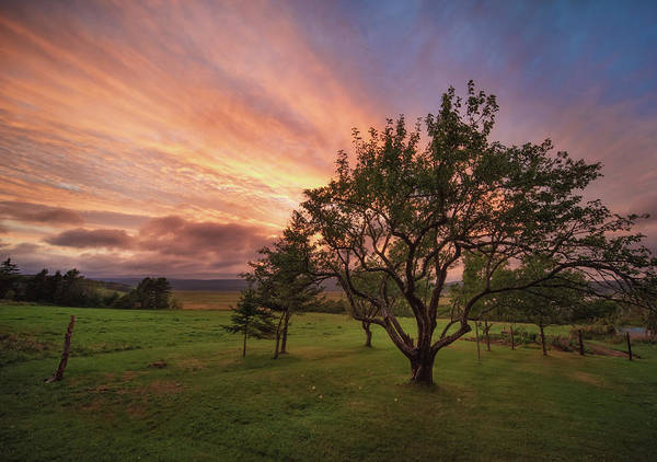 Photograph - Apple Tree In Evening by Tracy Munson