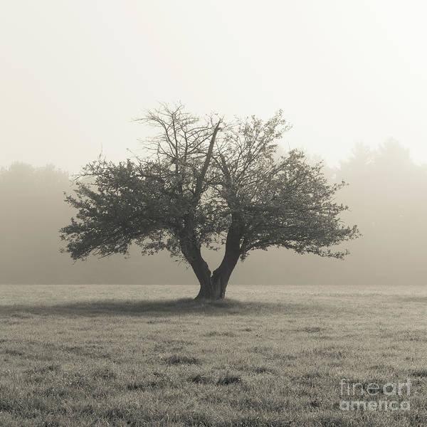 Apple Tree Photograph - Apple Tree In The Mist by Edward Fielding