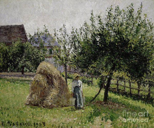 Wall Art - Painting - Apple Trees In Eragny, Sunny Morning, 1903  by Camille Pissarro