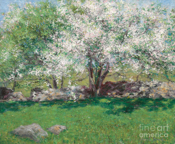 Blooming Tree Painting - Apple Trees by John Leslie Breck