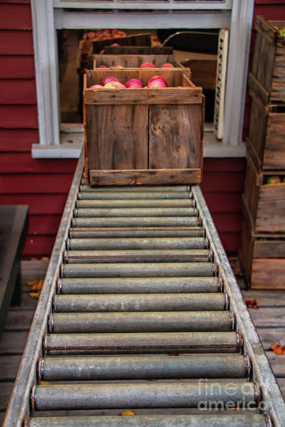 Macintosh Apple Photograph - Apple Unloading Time by Elizabeth Dow