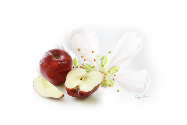 Apples And Blossom Art Print