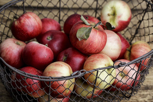 Fresh Photograph - Apples by Nailia Schwarz