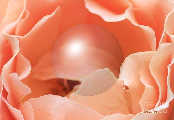 Photograph -  Apricot Rose With Sphere by Jean Clarke