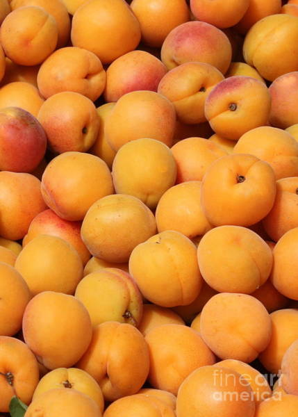 Photograph - Apricots by Carol Groenen