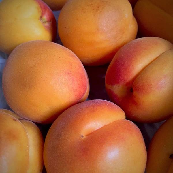 Photograph - Apricots by Cristina Stefan