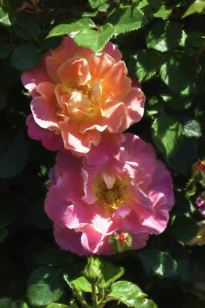 Plein Air Photograph - April Roses Ala Monet by John Haldane