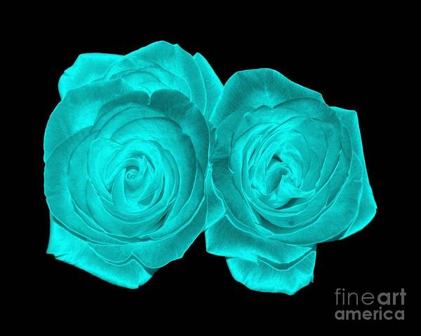 Photograph - Aqua Turquoise Colored Roses With Underwater Effect by Rose Santuci-Sofranko