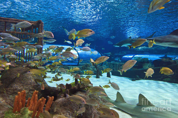 Photograph - Aquarium by Jill Lang