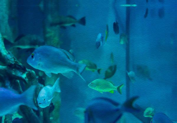 Photograph - Aquarium View by Gene Norris