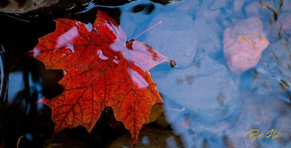 Photograph - Aqueos Autumn by Rikk Flohr