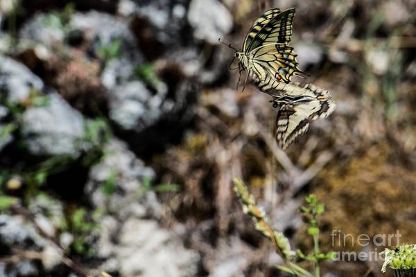 Photograph - Aquino's Butterflies by Joseph Yarbrough