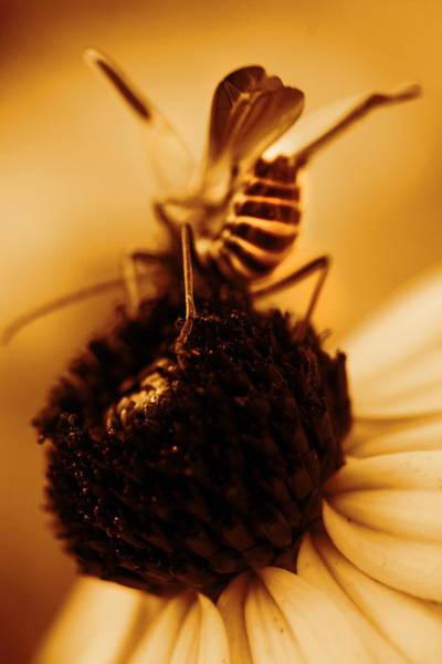 Photograph - Arabesque - Gold by Angela Rath
