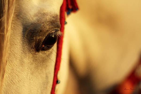 Wall Art - Photograph - Arabian Horse by Artur Baboev