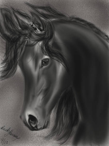 Drawing - Arabian Horse  by Becky Herrera