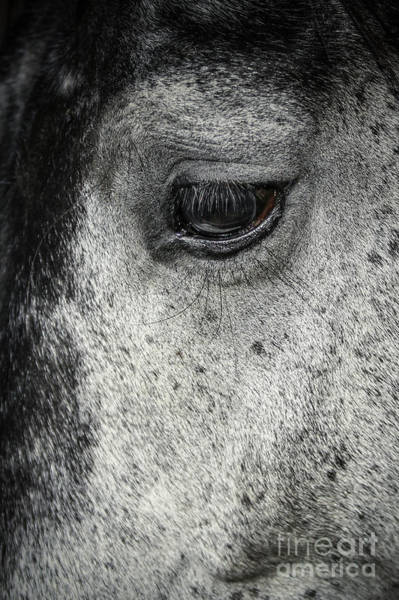 Photograph - Arabian Horse Eye by Dimitar Hristov