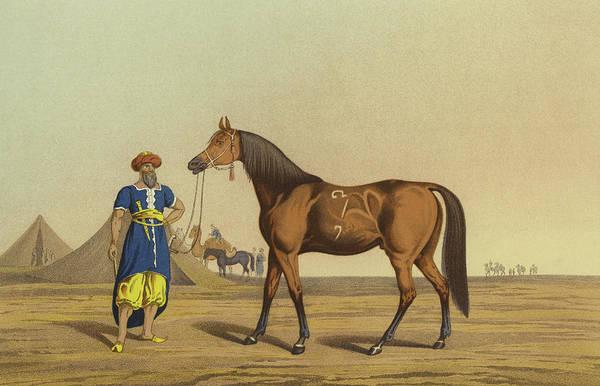 Arab Horse Painting - Arabian Horse by Henry Thomas Alken