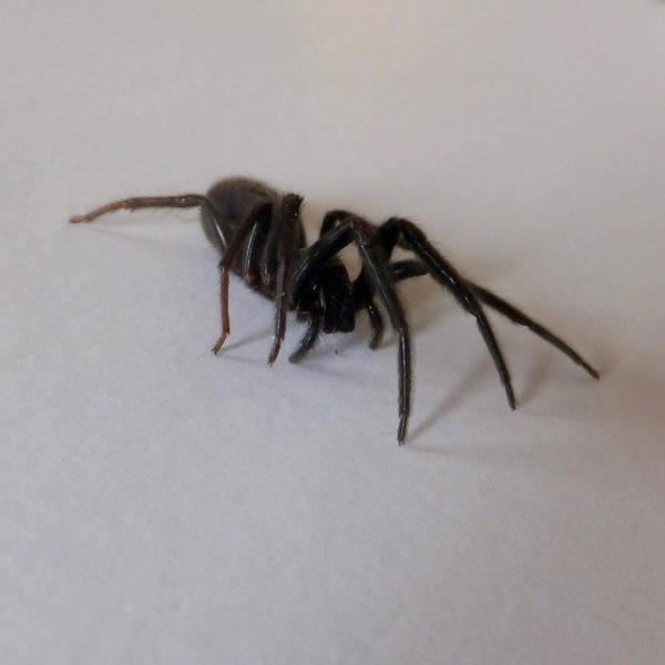 Photograph - Arachne Noire by Marc Philippe Joly