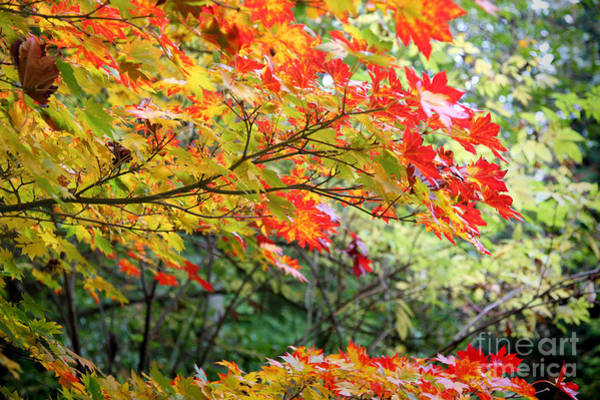 Wall Art - Photograph - Arboretum Autumn Leaves by Peter Simmons