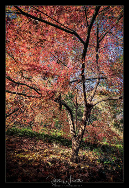 Wall Art - Photograph - Arboretum Colors by Robert Fawcett