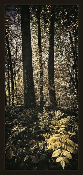 Arboretums Photograph - Arboretum Foliage by Robert Fawcett