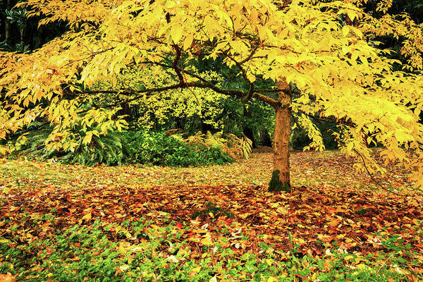 Wall Art - Photograph - Arboretum Yellow by Mihai Andritoiu