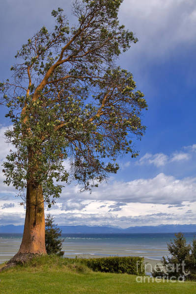 Wall Art - Photograph - Arbutus Tree At Rathtrevor Beach British Columbia by Louise Heusinkveld