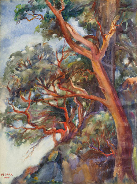 Wall Art - Painting - Arbutus Trees by MotionAge Designs