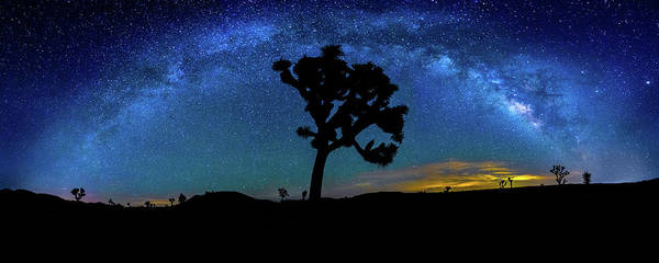 Arc Photograph - Arc De Joshua Tree I by Peter Tellone