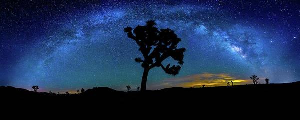 Big Sky Photograph - Arc De Joshua Tree I by Peter Tellone