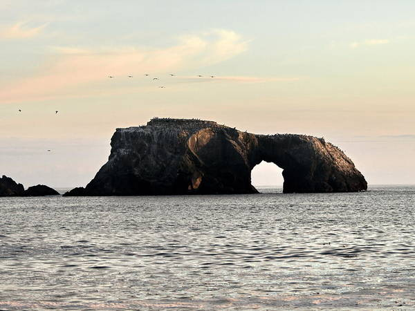 Wall Art - Photograph - Arch Rock And Seabirds by Richard Thomas